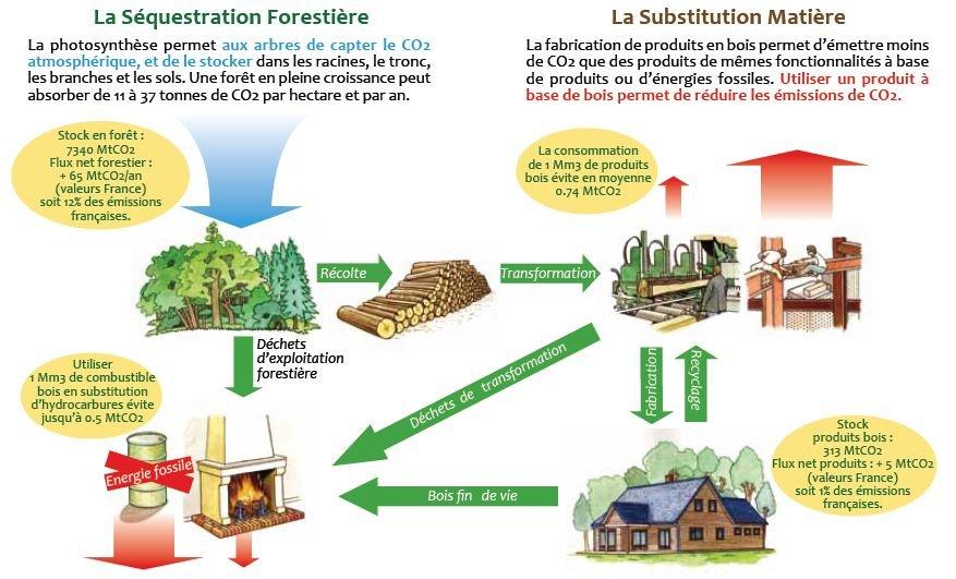 Carbone : Forêt - Bois des faits et des chiffres  dans BIODIVERSITE Capture